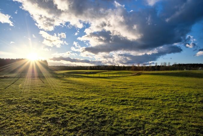 Sunset on green Field Landscape
